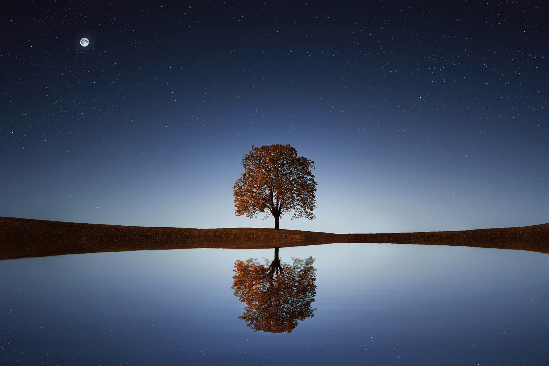 tree-reflection 2018